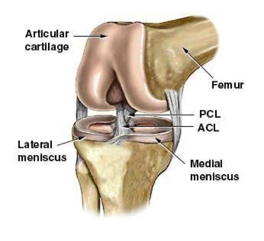 ACL injury physio | Ponsonby Physiotherapy